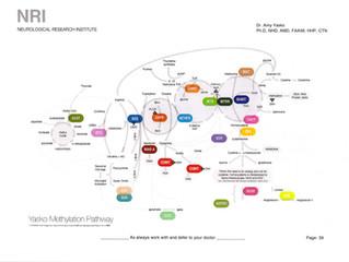遺伝子栄養療法(ニュートリジェノミクス)