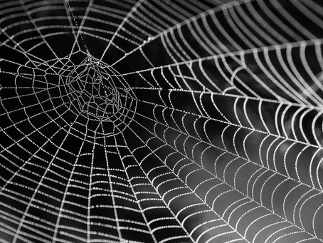 The crypto 'Spider Web' thesis