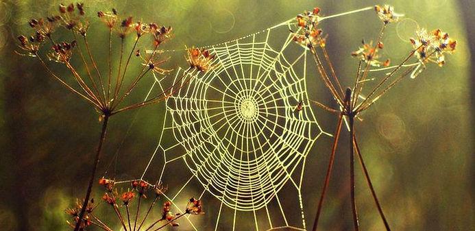 drawn-spider-web-enchanted-tree-16.jpg