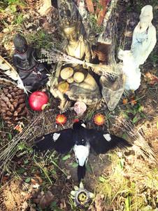 Shrine to Acorn Woodpecker on my travels through Sebastopol, CA in September 2018.