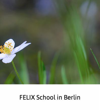 Felix School in Berlin