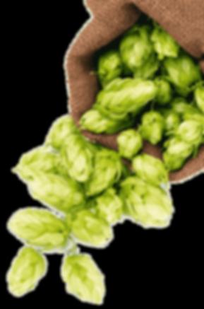 hops-png-1.png