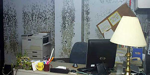 Office Mold Infestation.jpg