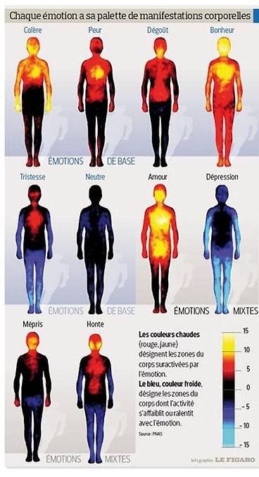 Impact de nos émotions sur notre corps. la «carte corporelle des émotions » établie par des chercheurs finlandais. Leurs travaux, publiés fin décembre 2013 dans les Comptes rendus de l'Académie des sciences américaine (PNAS), confirment notamment que les principales émotions humaines que sont la peur, la tristesse ou le bonheur sont ressenties physiquement de la même façon pour tous, quelle que soit la culture d'origine de l'individu. Valérie ALEGRE Hypnose Psycho-énergétique 78