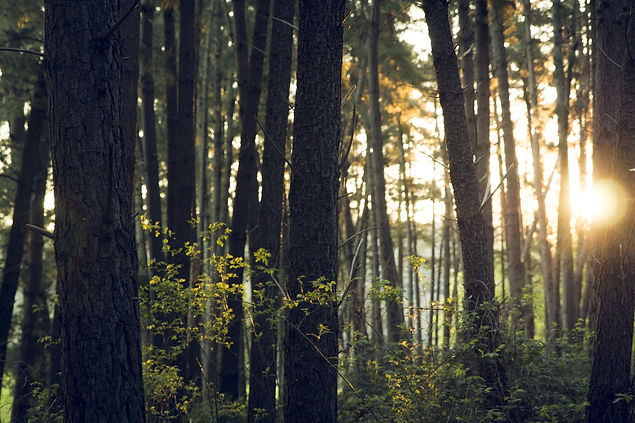 Waldbäume_Bild_von_Free-Photos_auf_Pixa