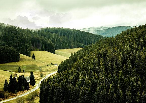 black-forest-3869476_1920.jpg