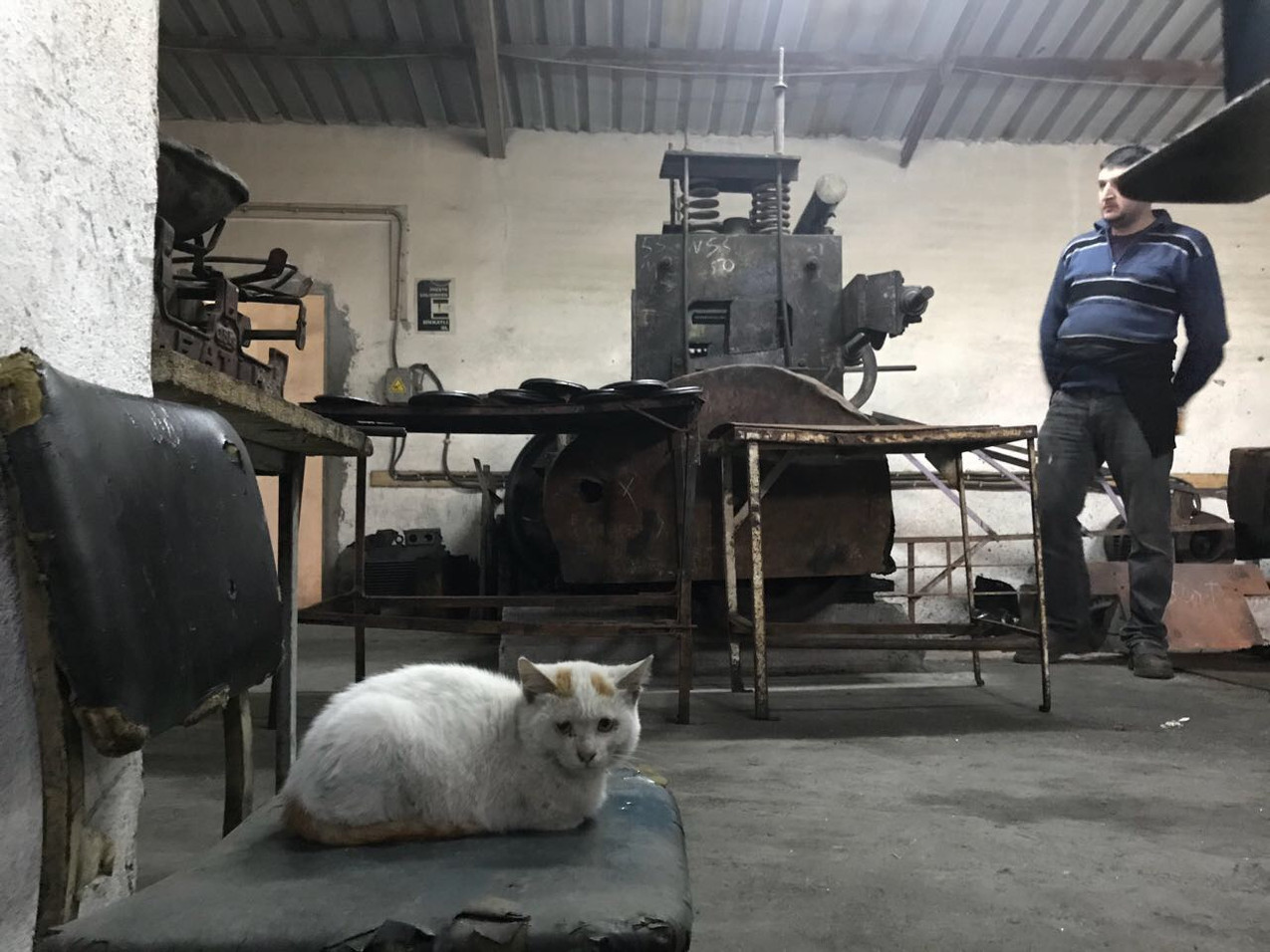 作業を見守るボス猫(写ってませんが子分猫2匹確認済)