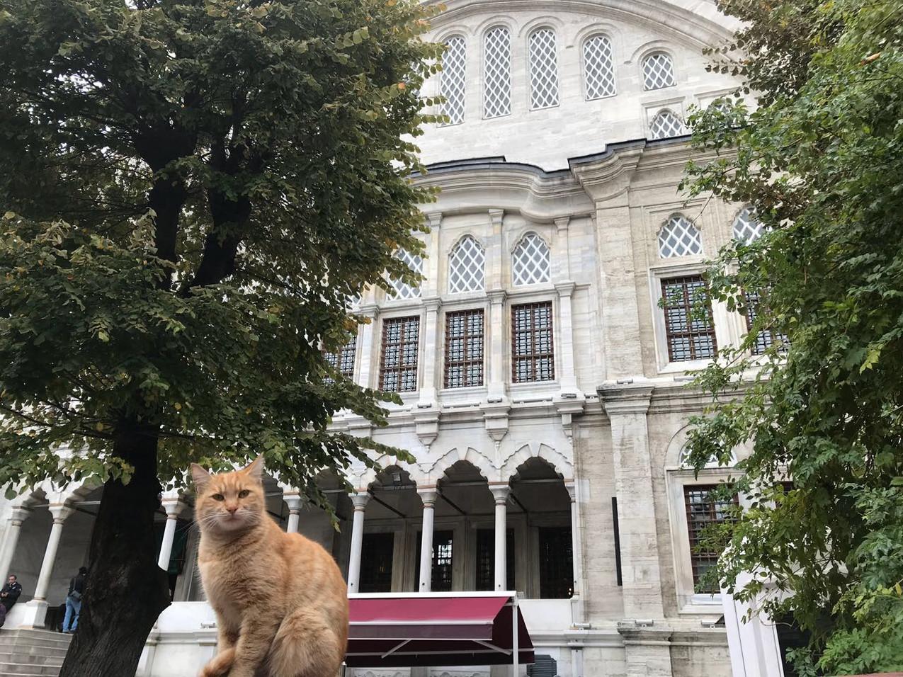 世界遺産だらけの旧市街と猫(猫だらけ)(トルコらしい画その参)