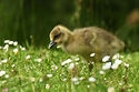 Little Chick 1st Place Tracy Mair.jpg