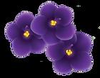 African-Violet_multiple-buds_no-leaf.png