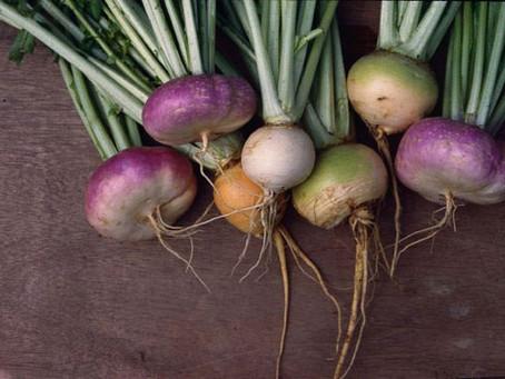 Turnips Root to Leaf