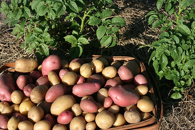 basket-of-potatoes.jpg