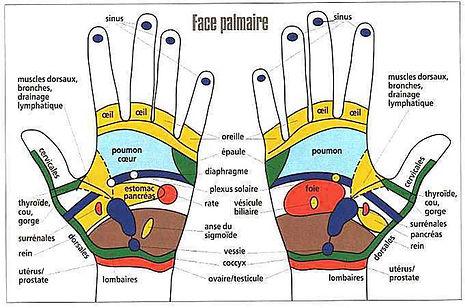 Réflexologie palmaire - face palmaire