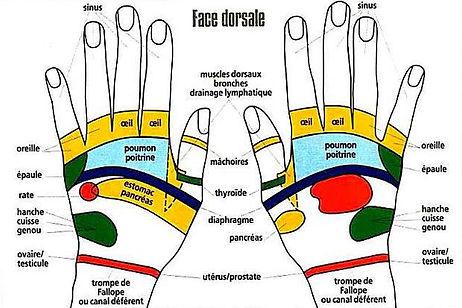 Réflexologie palmaire - face dorsale