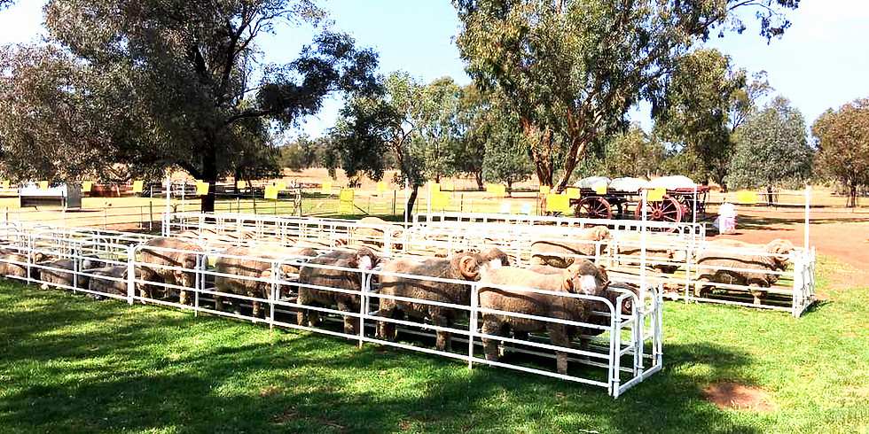 ANNUAL ON-PROPERTY RAM SALE