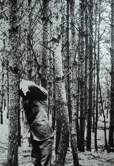 in the wood.jpg