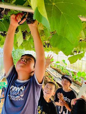 grape 5.jpg