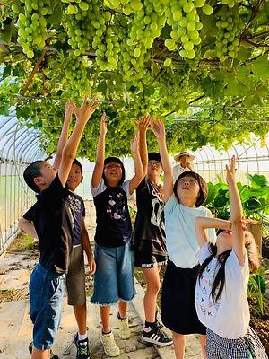 grape 4[.jpg