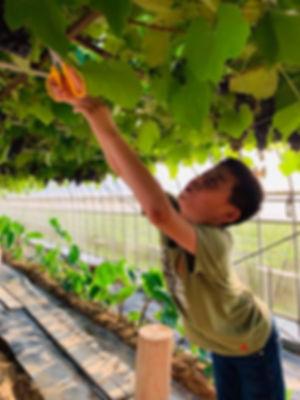 grape 3.jpg