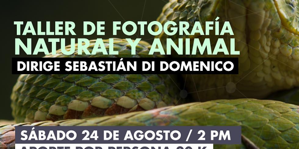 ARTE: Taller de fotografía natural y animal