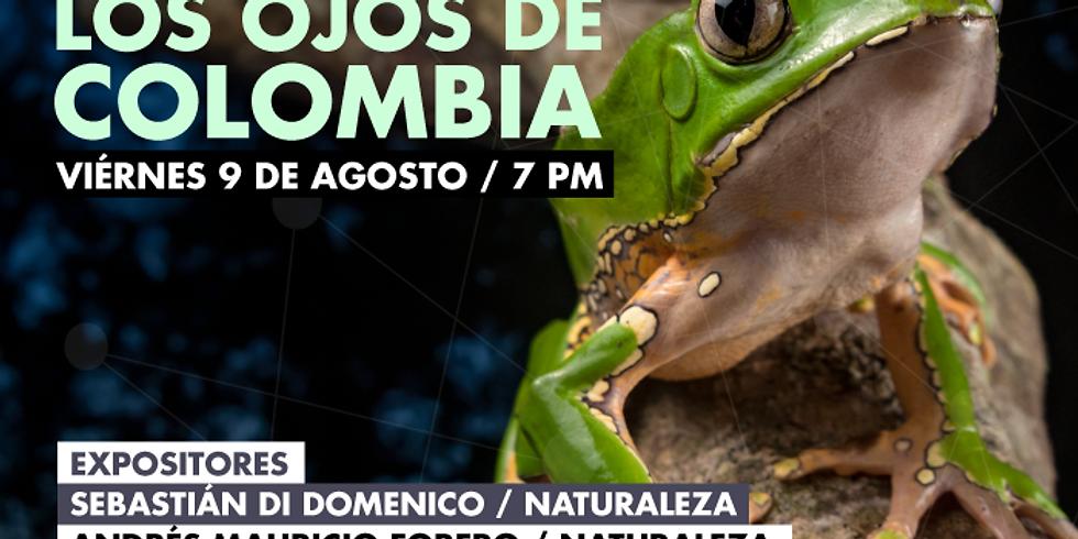 ARTE: Los ojos de Colombia en Galería Kilele