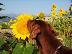 Django enjoying Nature around us
