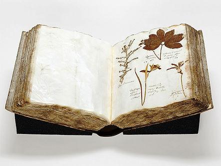 Herbarium_von_1653-EZ_v2.jpg