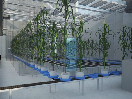 Phenomics: Challenging New Technologies to Solve a World Wide Issue
