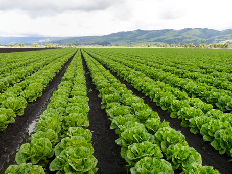 Emerging Trends to Help Facilitate Feeding the World