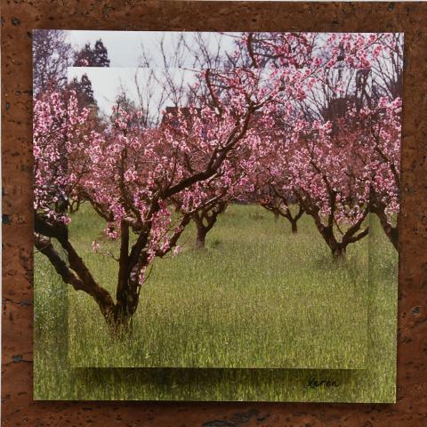 Cherry Trees on Chocolate cork