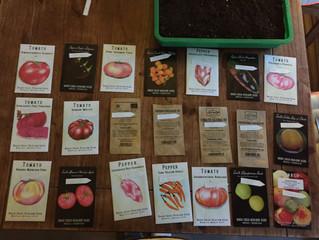 Semer les Solanacées (Tomates, Piments, Poivrons, Aubergines...)