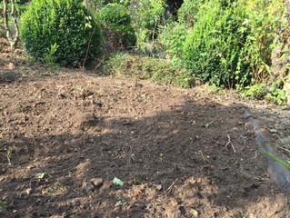 La plantation des plantes bisannuelles
