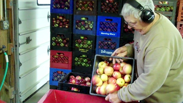 Apples onto Conveyer Belt