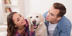 asigurare-animale-companie-1044x519.jpg