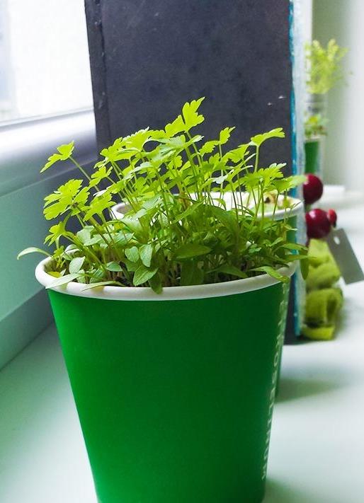 Zelene rastline