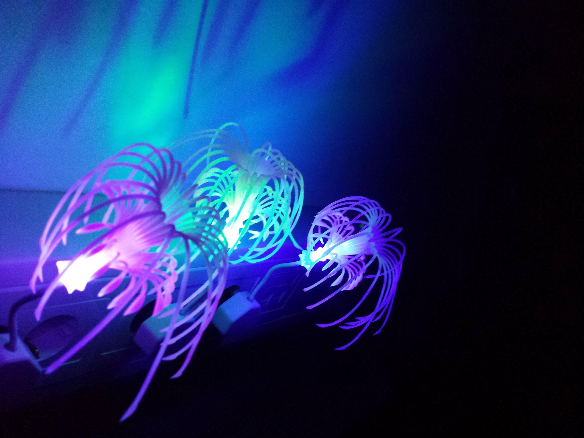 Magične lučke v Utrinku sanj