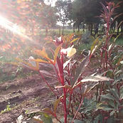 RedPlants.jpg