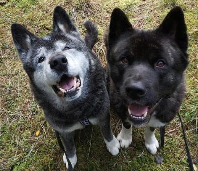 Green Canine koiratuotteet tyytyväiset käyttäjät
