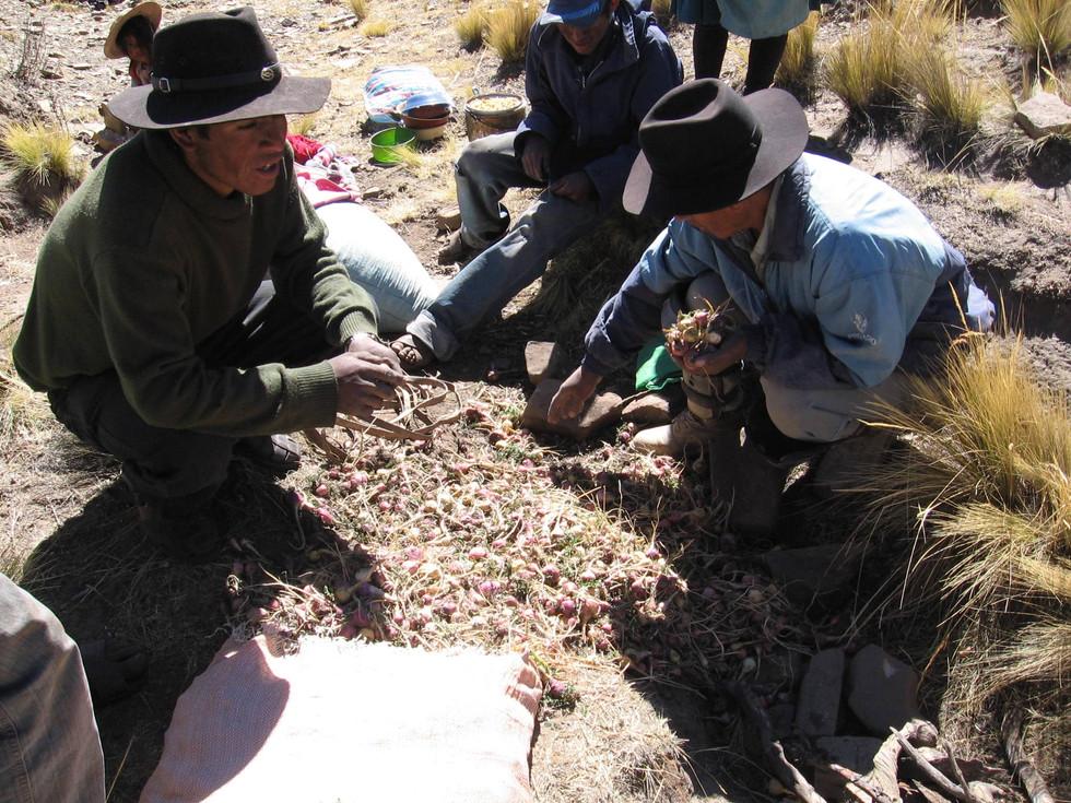 Bolivian Macan viljelijät