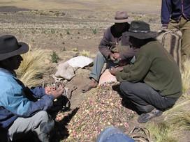 Bolivian maca tarkistus