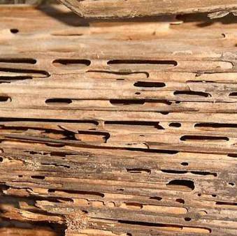 Termite Damage Repair Bluewater Bay
