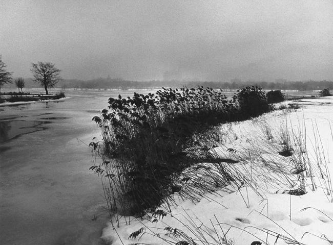 Melhado, Paul_Meadow_Lake