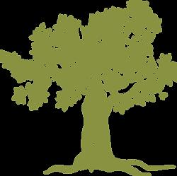 olive tree WATERMARK.png