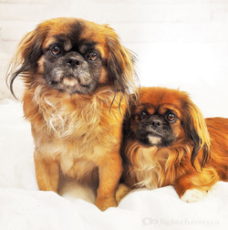 Buster and Dolly