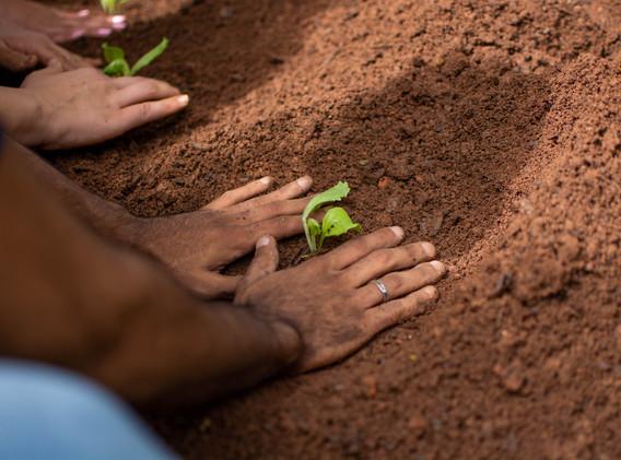 Cuide, cultive, queira o bem. O resto vem! (Caio Fernando Abreu)