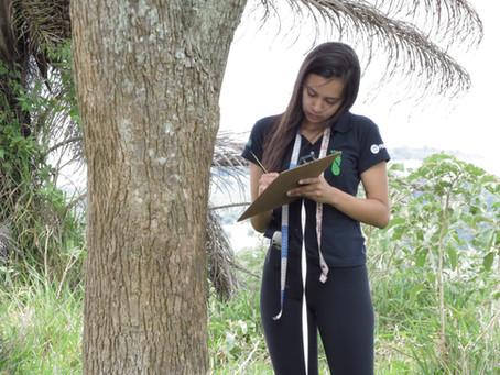 Por que aderir o Sistema Agroflorestal (SAF)?