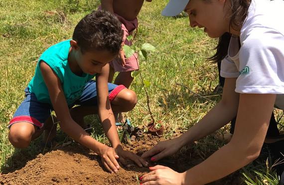 Plantar é vida