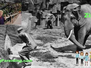 ZagZig Memories of Ziggy Zagging at the Zoo