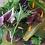 AlcheringaCottage_fresh_salad_mix_localproduce