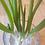 AlcheringaCottage_fresh_herbs_onions_localproduce